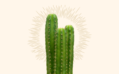 What is San Pedro cactus and why microdose it?